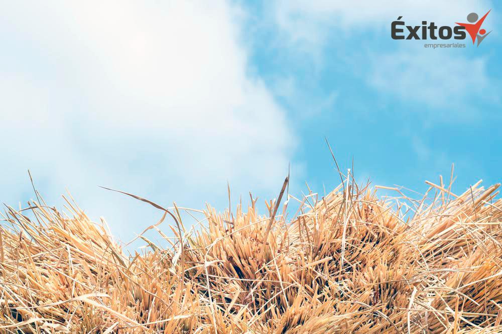 La paja de arroz convertida en bioproducto, en el proyecto en el que participa la empresa de Gabriel Batalla