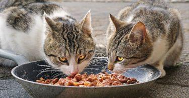 mascotas España